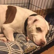 Last Dog Adopted From The Shelter Smiles After Stepping Into His New Home