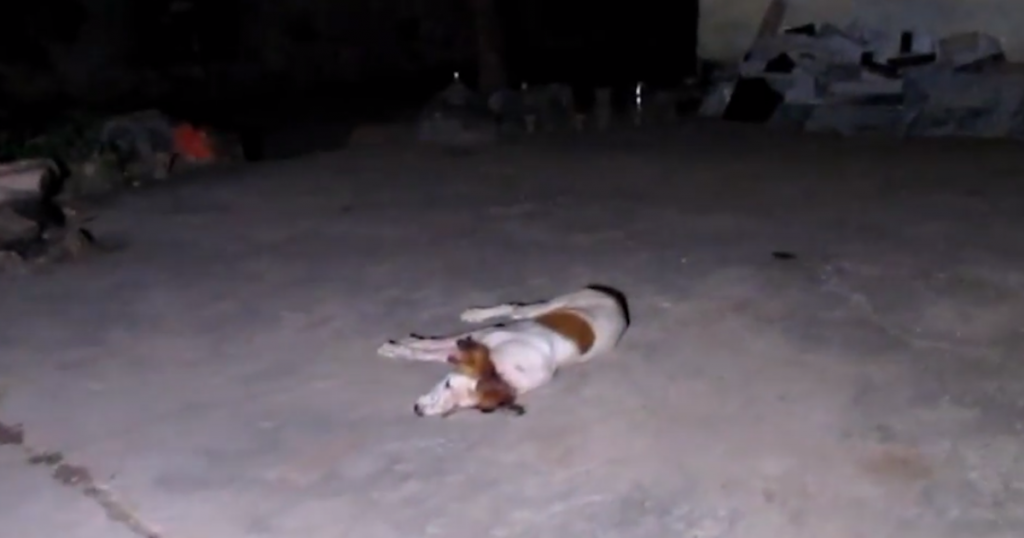 Cheerful Dog Wasn't Going To Let Anything Bring Him Down And Stop His Joy
