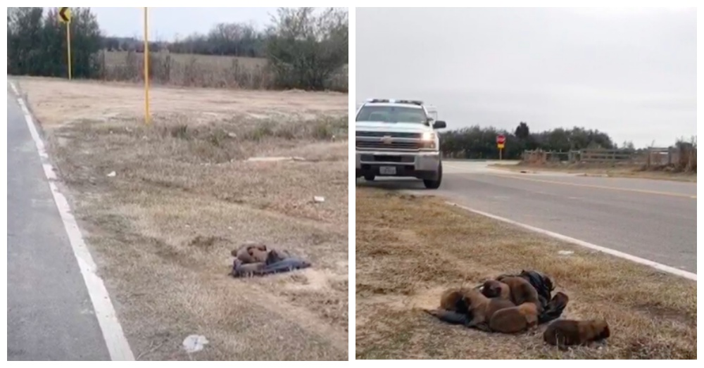 Monster Throws Eight Newborn Puppies Out Car Window