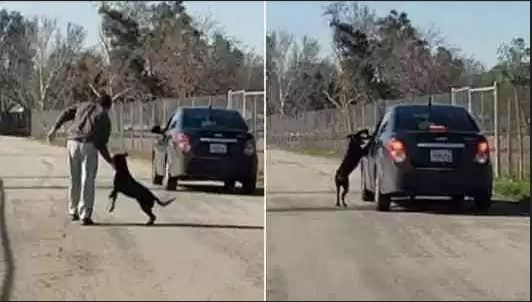 Caught on video: Dog chases his owner's car after abandoned