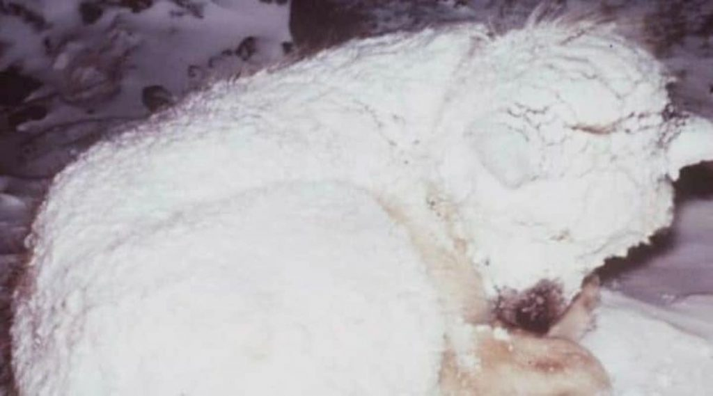 Dog Found Freezing In The Snow, Neighbors See He's Been Trying To Help Someone