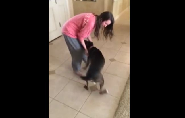Dog ecstatic to be reunited with owner