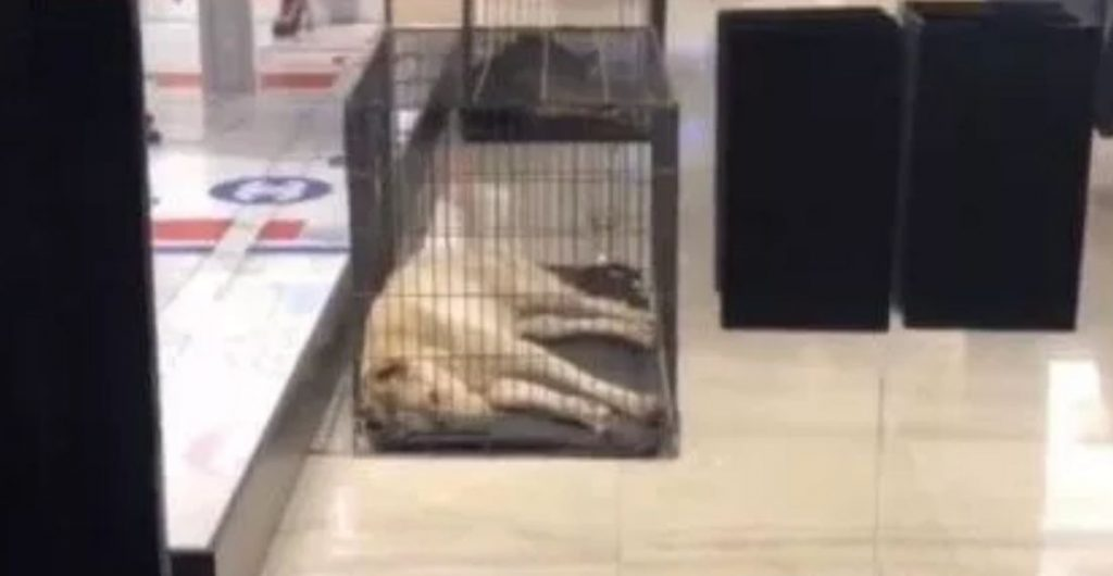 Reality star outraged after seeing dogs in small cages at Chanel store