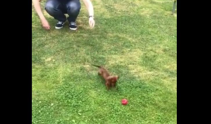 Adorable 9-Week-Old Puppy Is Already A Pro At Fetch
