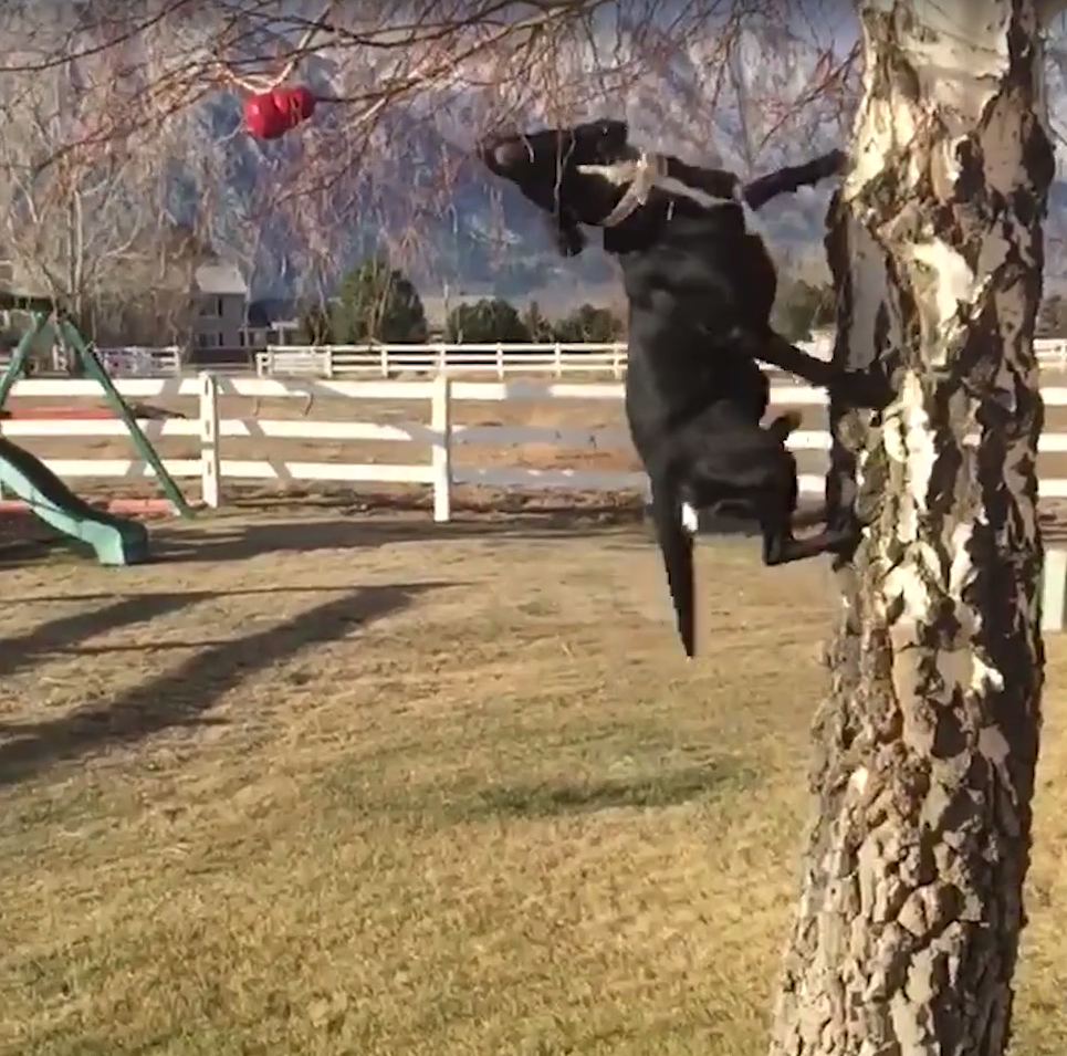 Mom Throws Ball For Dog, And He Comes Back With Something Else Entirely