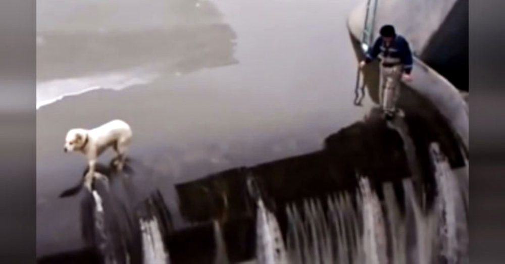 Brave Hero Scales Dangerous Dam To Rescue Dog Frozen In Fear On The Edge.