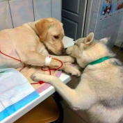 Good Boys Who Are Ready To Get The Job Done Whenever Duty Calls