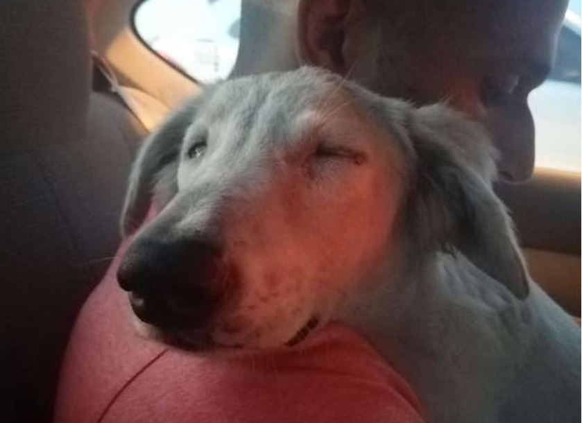 Street Dog Falls Asleep On The Shoulder Of The Man Who Decided To Rescue Him