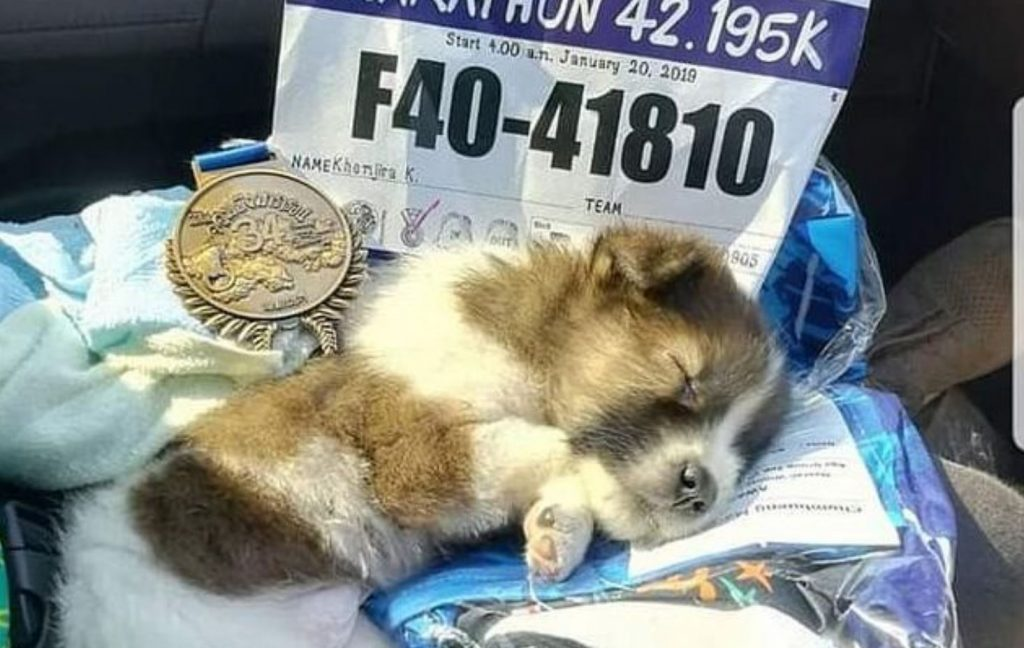 Marathon athlete ran 19 miles carrying puppy she found along route