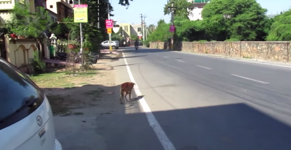 Rescuers Find Dog Hobbling Down The Road, And It's A Wonder He's Still Alive