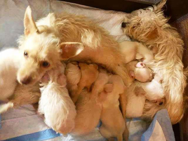 Abandoned mother dogs bonded together to save their newborn puppies