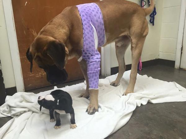 Two Homeless, Sick Dogs Meet At Hospital And Comfort One Another