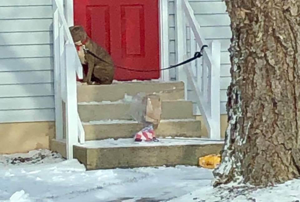 Dog cowered and quivered as rescuer urged her off of frigid porch