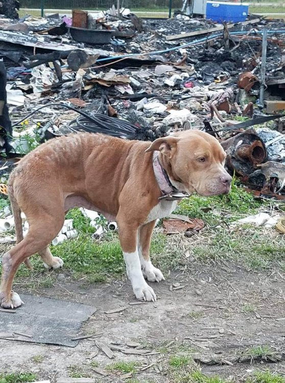 Dog waited even after her home burned down and her family left