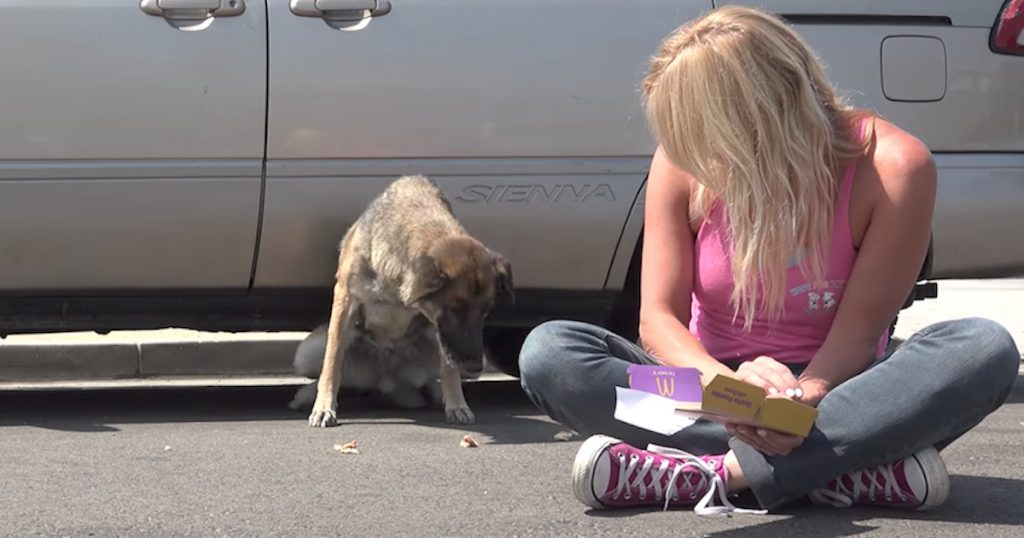 Senior Dog Was Ready To Leave Her Lonely Life On The Streets When They Showed Up