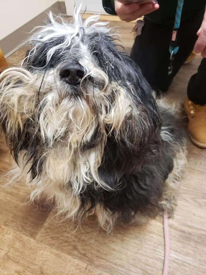 Update: Abandoned dog left in freezing shelter pen