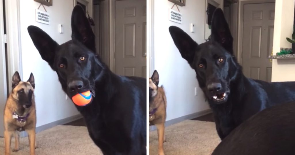 Dog Hears A Child Crying For The First Time, And His Face Turns To Concern