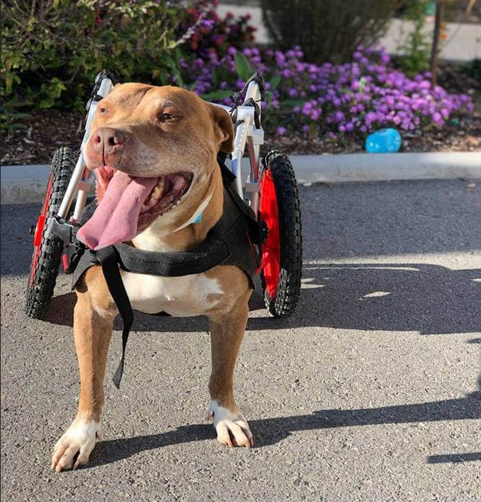 Shelter releases update about homeless dog in wheelchair