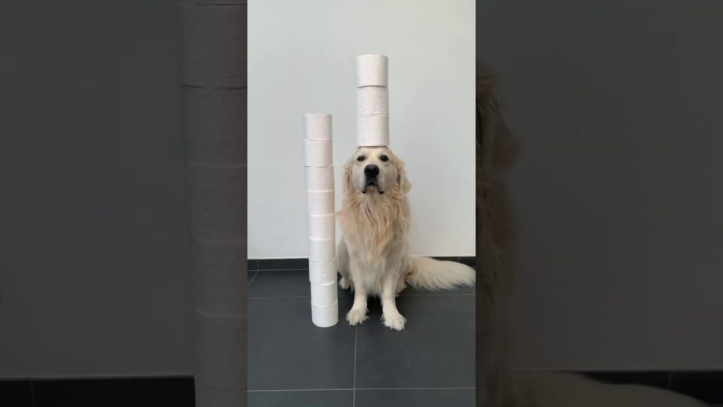 Dog Tries the Toilet Paper Challenge