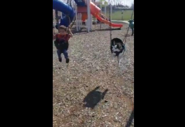 Husky puppy nearly falls asleep in swing set
