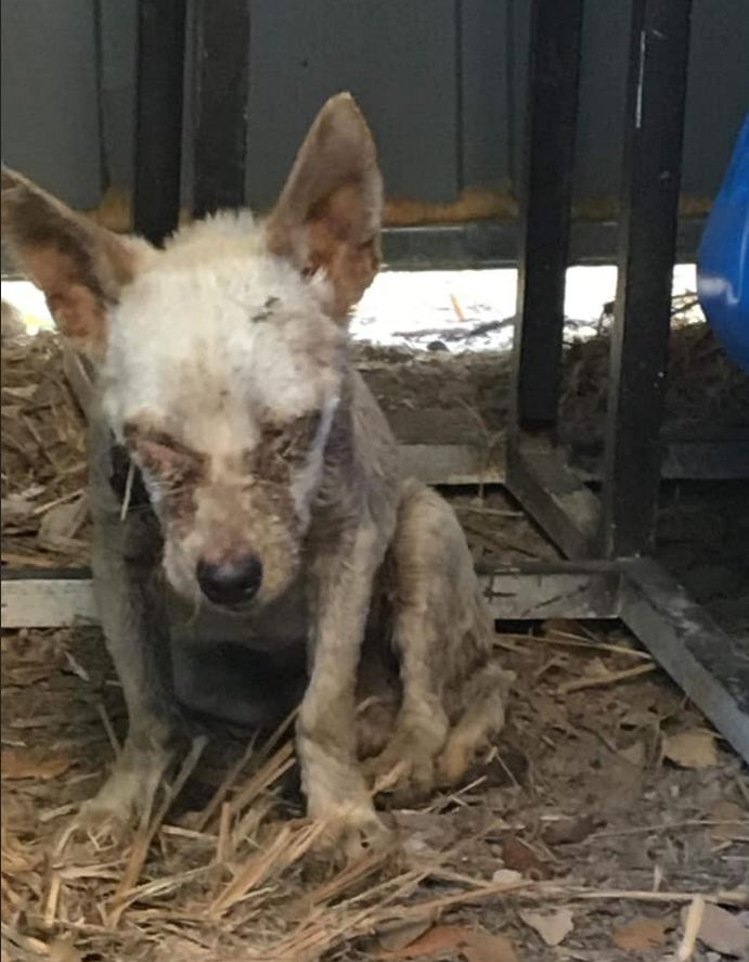 Emaciated blind dog found wandering along dirt road