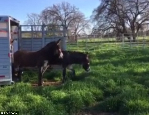 Rescue Donkeys Step Out Onto Grass For The Very First Time