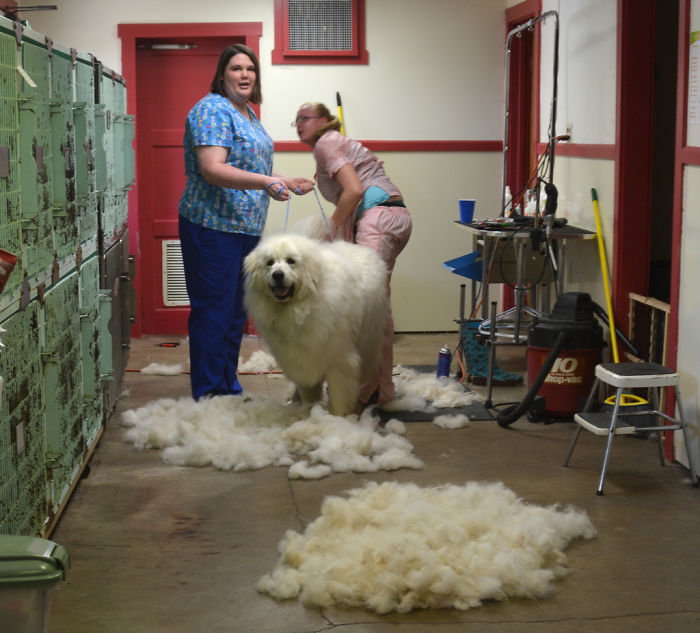 Groomer Puts Up List Explaining Why It Costs More Than You Getting Your Haircut