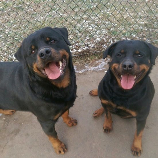 Kato and Kleo – two dogs locked up for 6 years finally freed