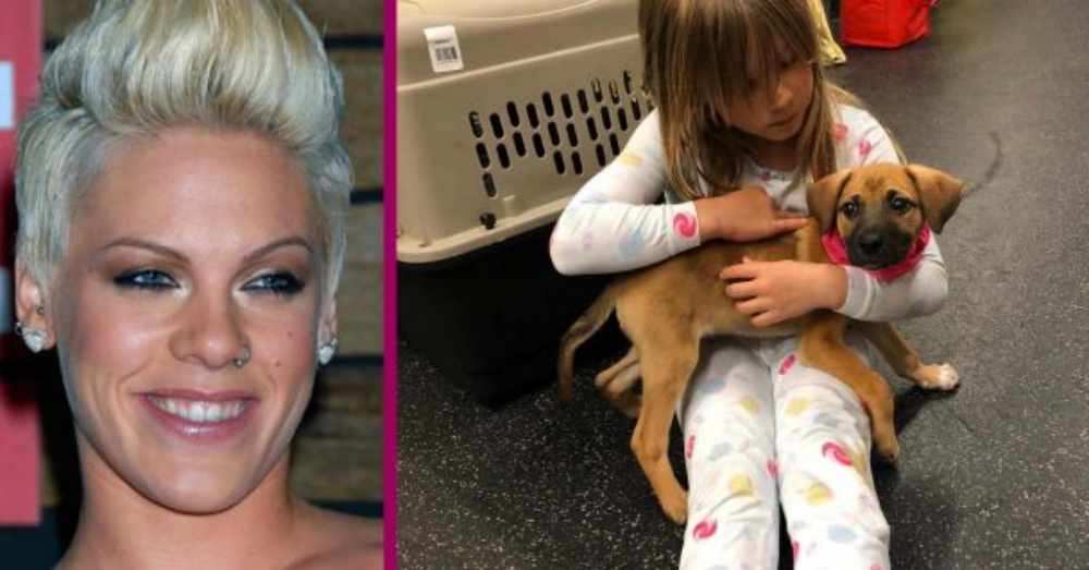 Singer Pink Recently Added A New Addition To Her Family