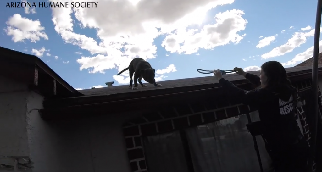 Stray Dog Having Way Too Much Fun On A Roof Is So Happy To See Rescuers