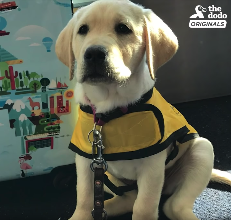 Former Service Dog Ecstatic To Step Into New Home And New Life