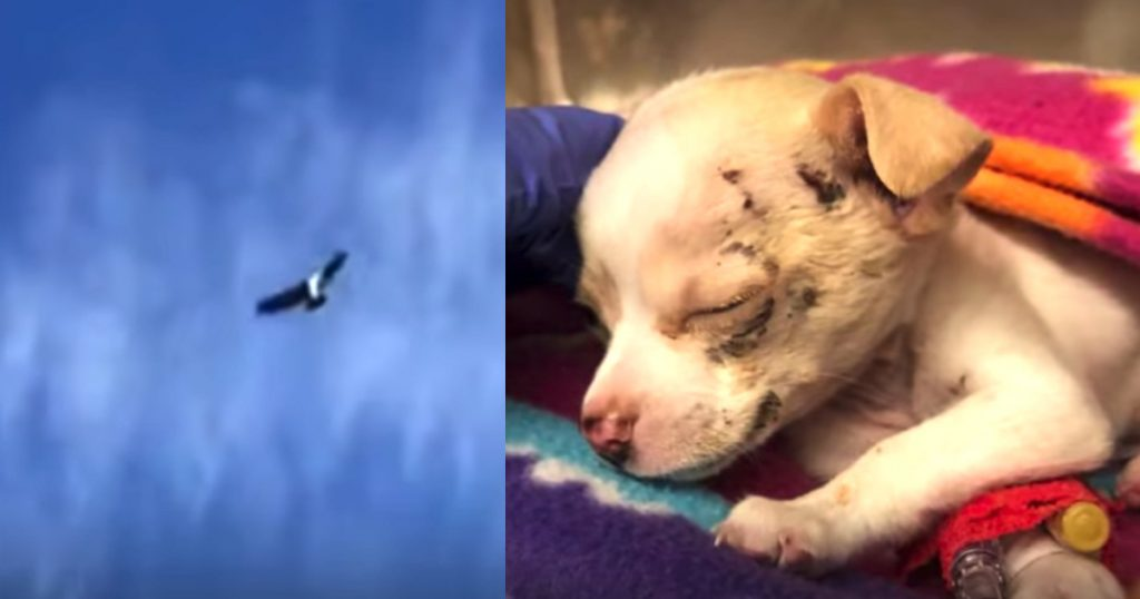 Construction Workers Hear A Puppy's Cries From Above Just As A Hawk Drops Him