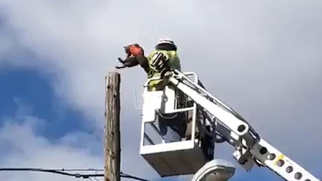 Verizon worker suspended for rescuing cat stuck on telephone pole