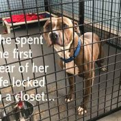 Dog who spent year in a closet, now lives in a cage – and she needs help