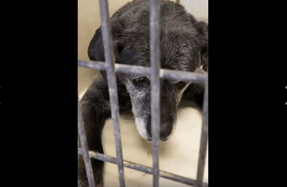 20-year-old dog surrendered day before Easter – help needed to save him