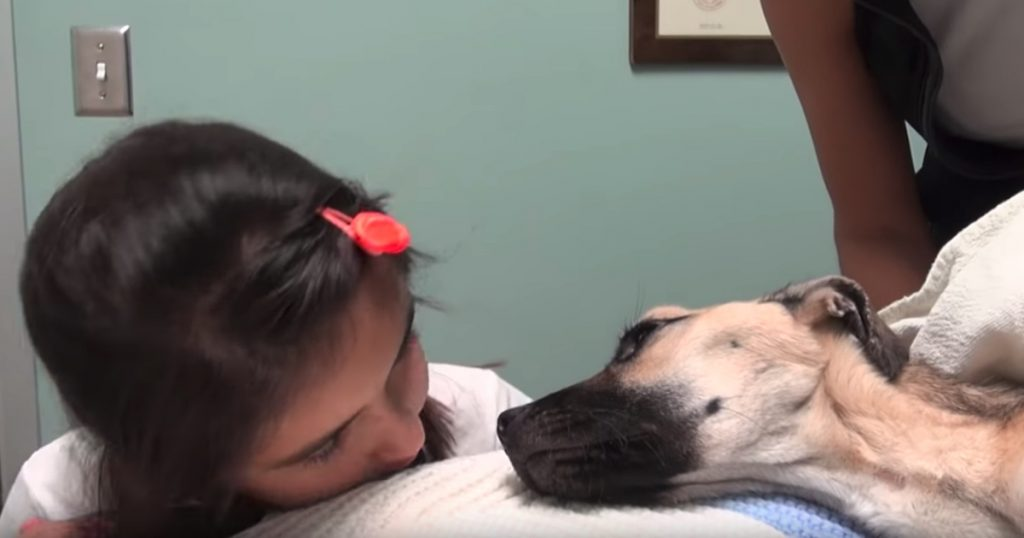 Little Girl Looks Into The Eyes Of A Dog Who'd Given Up, And Hope Is Restored