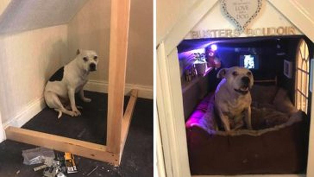 Dog With Trust Issues Gets His Own Corner Of The House To Make Him Feel Secure