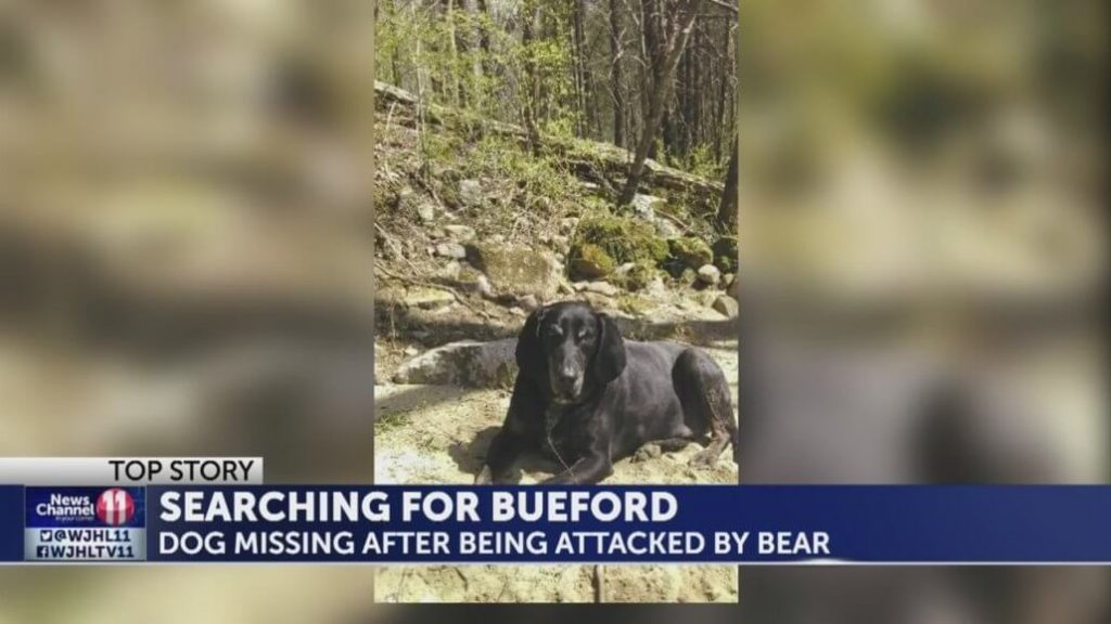 Desperate owner searches for her dog attacked by bear