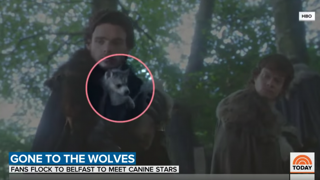 Fans Flock To Meet The Real Dogs Who Play Direwolves In Game Of Thrones