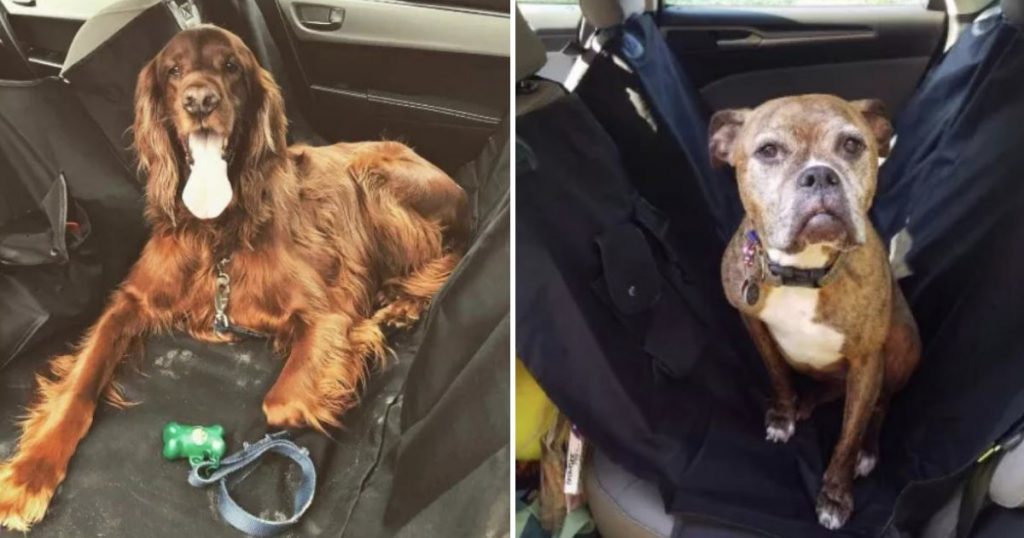 This Car Seat Cover Is Loved By 4,000+ Dog Parents, But Also Please Look At These Pictures Of Good Boys