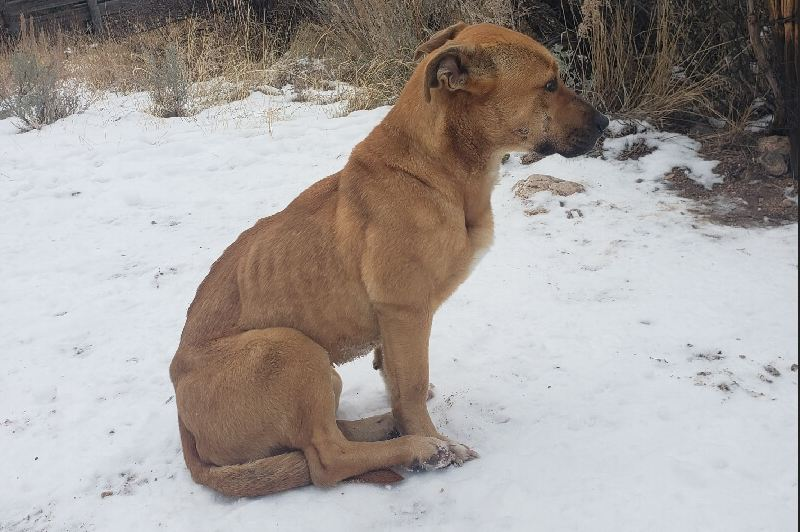 Man found lost dog on remote trail, then drove 1100 miles to make her his own