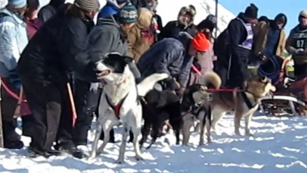 Excited Rescue Dog Makes Everyone Laugh By Talking At Start Of Race