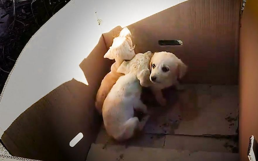 Man Rescues Abandoned Puppies Out Of The Trash Every Single Day