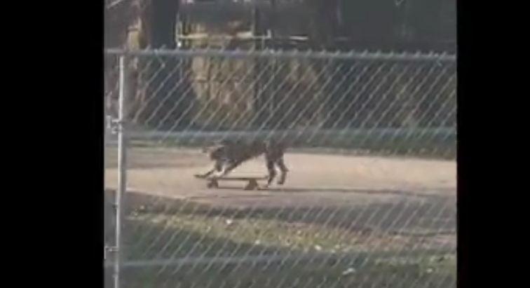 Officer catches dog skateboarding in Northwest Jacksonville