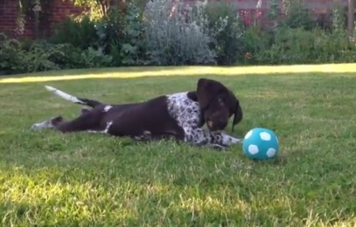 Adorable puppy discovers squeaky ball for the first time