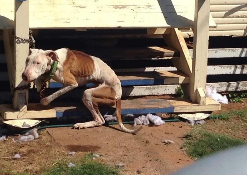 Dog left to suffer with no food or water at hands of neglectful owner