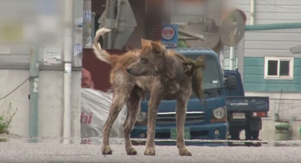 Stray Dog Turned Into A Hyena..