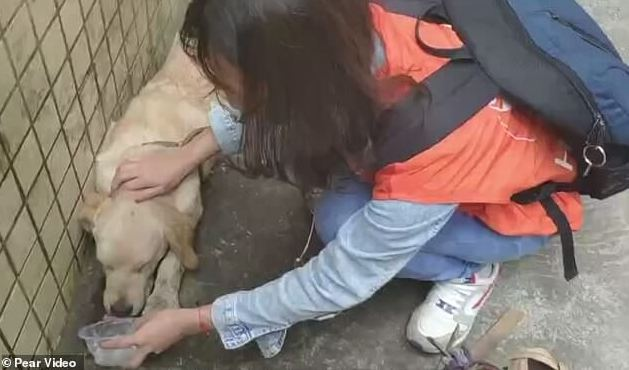 Rescuers save dog left hanging from window by owner to punish him