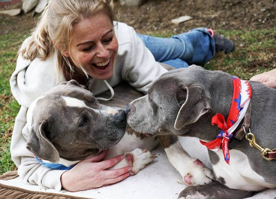 After 2 years in boarding, bonded dogs may have to go to the pound