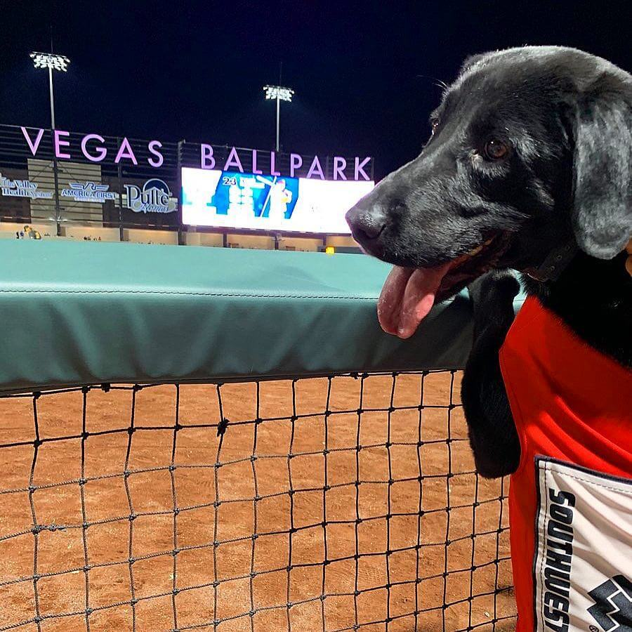 Umpire booed when he didn't let beloved bat dog do his job